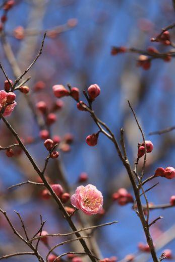 待ち遠しい春。。。