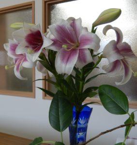 花から~受けたもの