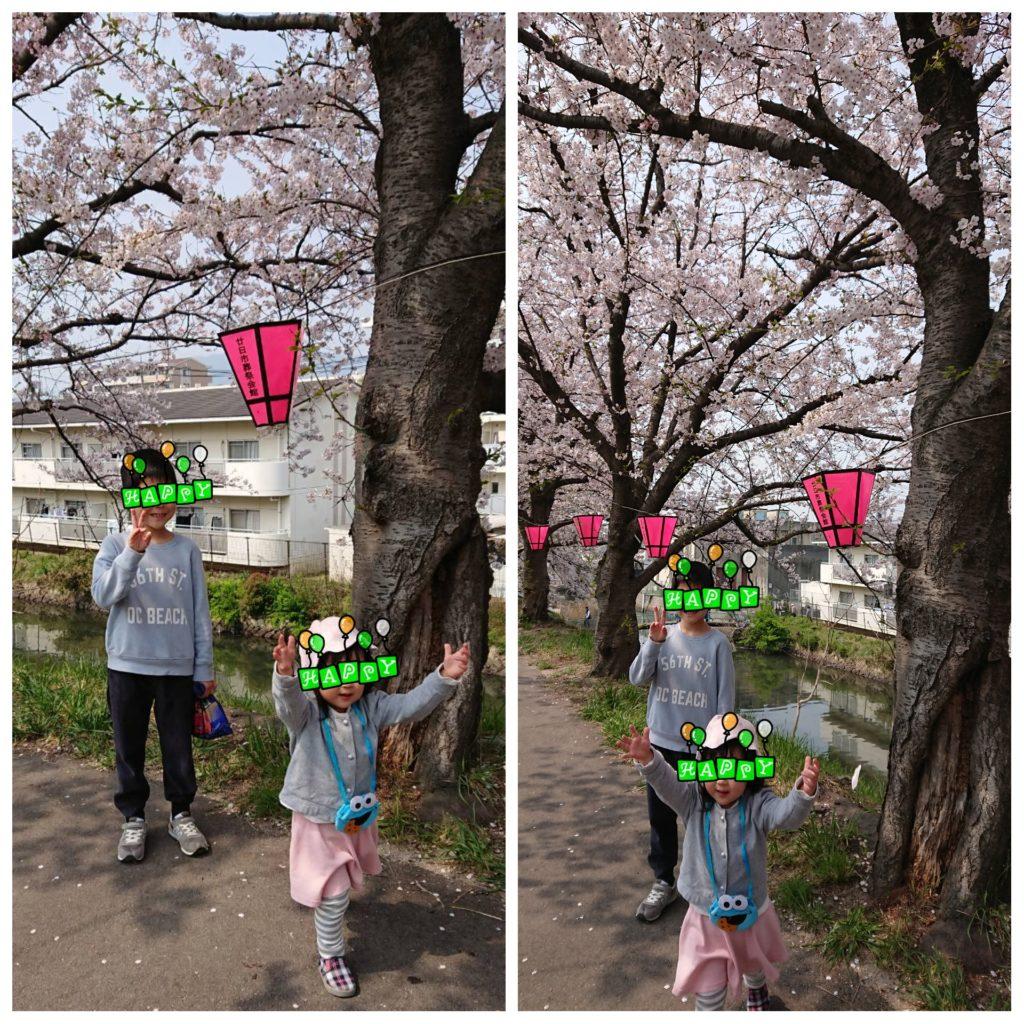 ☆桜祭り→ヤマト ワールド☆