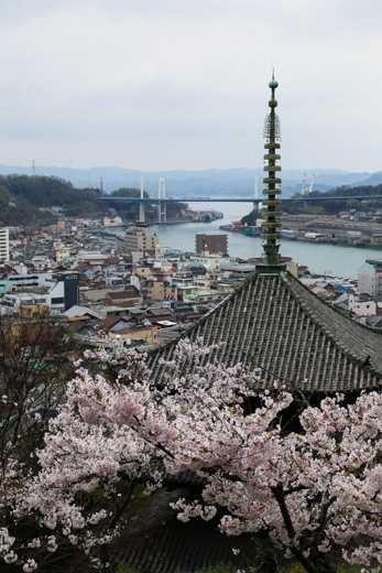 今年もコロナ渦の桜。