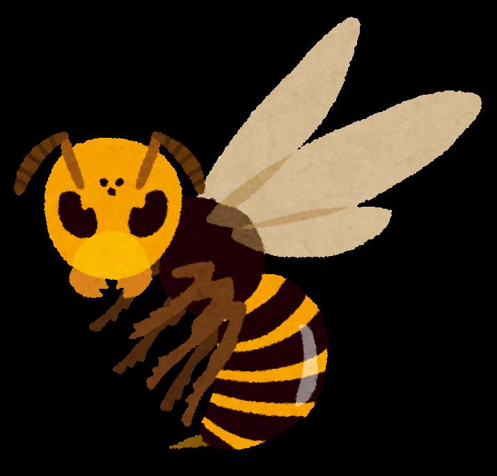スズメバチの脅威!!